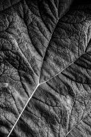 Leaf Detail by tpphotography