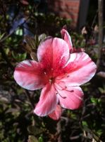 Small Pink Flower by ZacharyWolf