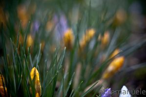 Spring Time - Day 68 - 09/03/13 by oEmmanuele