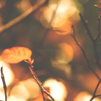 Magic Of Fall by EliseEnchanted