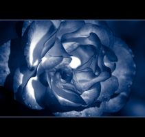 Mood Indigo by Vividlight