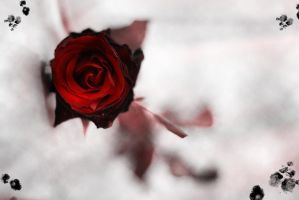 Dark Rose by ZoBy