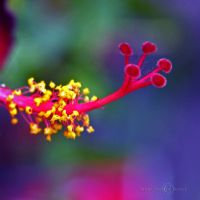 Singing a Colourful Morning by WhiteBook