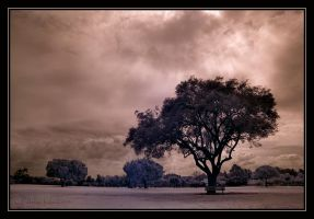 Lonely. by israelfi