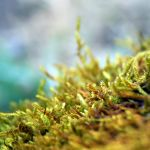 of moss by SvitakovaEva