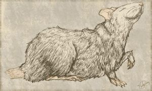 Dominic the Rat by lunchbox-pixels