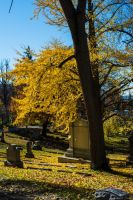 Woodland Cemetary in Fall by PLutonius