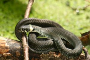 Snake stock by Malleni-Stock