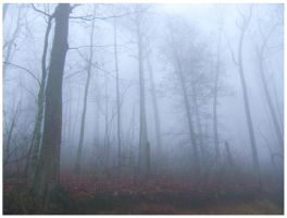 This Foggy World by CrystalMarineGallery