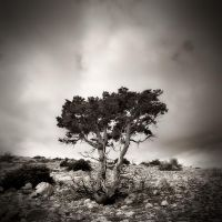 Dry Cres by denis2