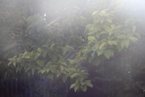 Leaves Through the Haze by AtomicBrownie