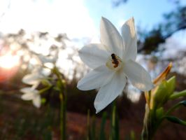 Winter Flower by irrationalrationale