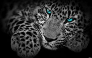 EgFox LeoparD8 blue eye HD by Eg-Art