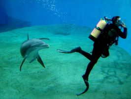 Dolphin and Diver by Zeds-Stock