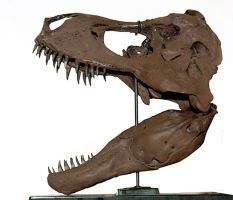 T-REX skull for a friend l by hannay1982