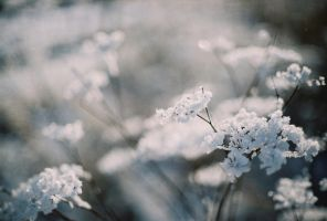 frost bokeh. by Perspeqtive