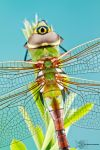 Common Green Darner - Anax junius by ColinHuttonPhoto