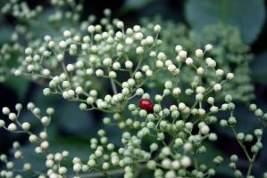 Coccinellidae inside by FroZnShiva
