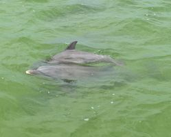 Mother and Baby Dolphin 4 by Lauren-Lee