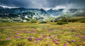 Mountain flowers by JosivBG