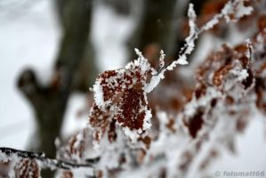 Winter-Bokeh by fotomatt66