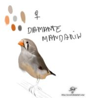 Diamante Mandarin by joscat