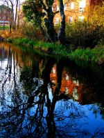 reflected tree by crazybx