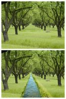 Forest before and afer by eferna