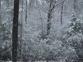 Forest of Snow VI by Kumidaiko