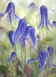 Blue Clematis by louise-art