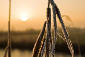Ice crystals by Master-47