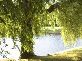 Willow Tree by andelana
