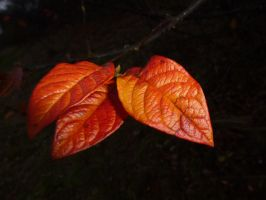 Autumn Night Leaves with Their Colourful Pyjamas by SrTw