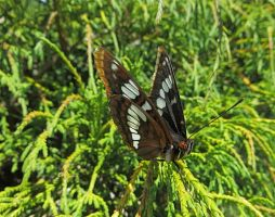 Beacon Hill Park Butterfly by rmbastey