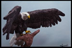 :.Bald Eagle 2.: by XPantherArtX