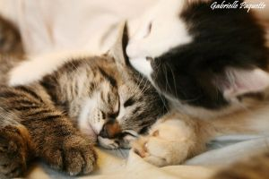 Kitty brotherhood by Galabrielle