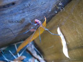 Daddy Long Leg by SoliDeo