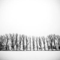 line of trees by augenweide