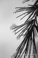 Snow, Drops, and Pine Needles 02 by JForbes1701