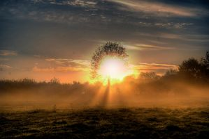 Early rising V by Allegoria-Images