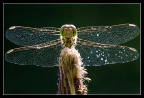 Glass winged angel by MessiahKhan