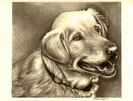 Golden Retriever by Xx-mei-xX