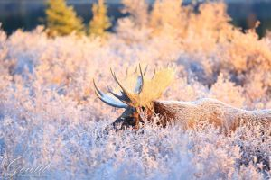 Through Frost by ThisWomanWanders