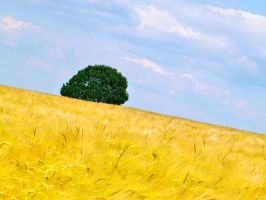 Tree in a Field by Thomas61