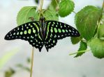Butterfly 5 by LucieG-Stock