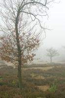 Silent trees in misty land 5 by steppeland