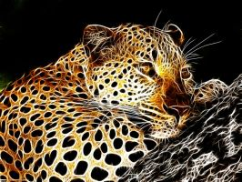 Leopard by Lolly1123