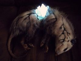 crystal fungus on opossum by mfmsmz15