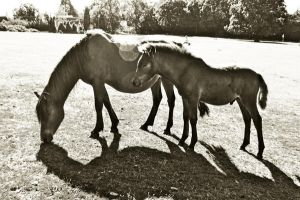 Mother and foal by LubelleCreativeSpark
