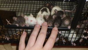 Radiant Dawn Litter 3 Weeks by usedbooks